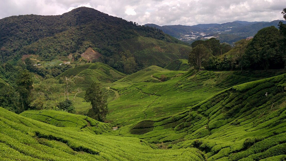 Piantagioni di te cameron highlands